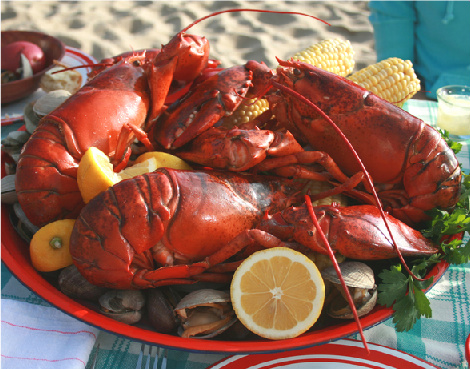Fresh Lobsters direct to you within 24hrs